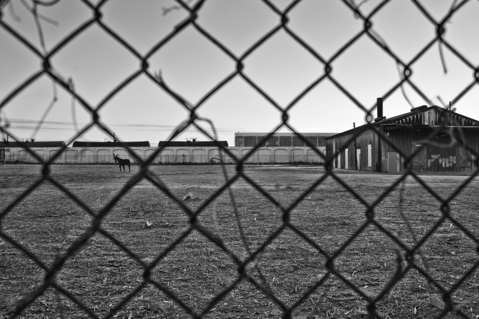 Looking through a fence at an empty lot in the Bywater of New Orleans, LA