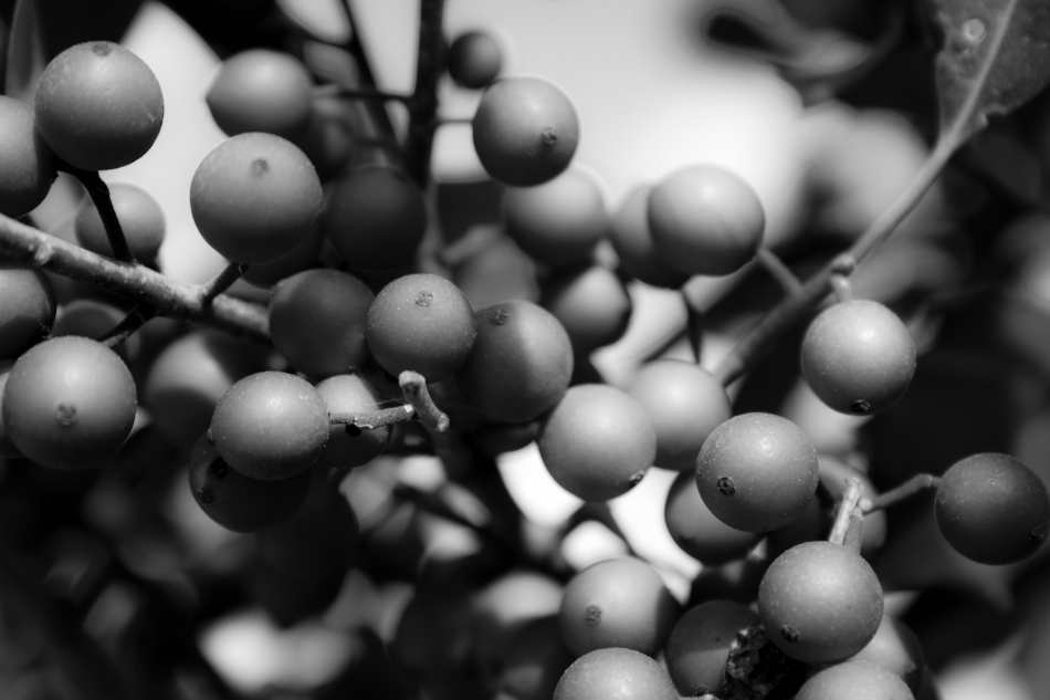 Macro shot of some berries