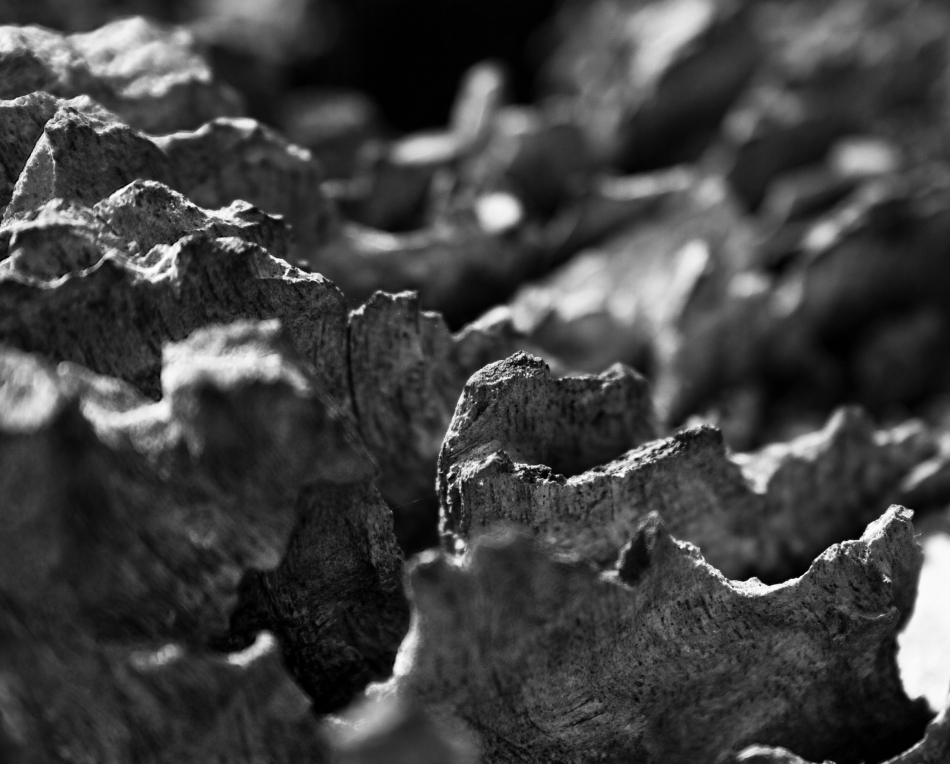 A closeup shot of tree bark.
