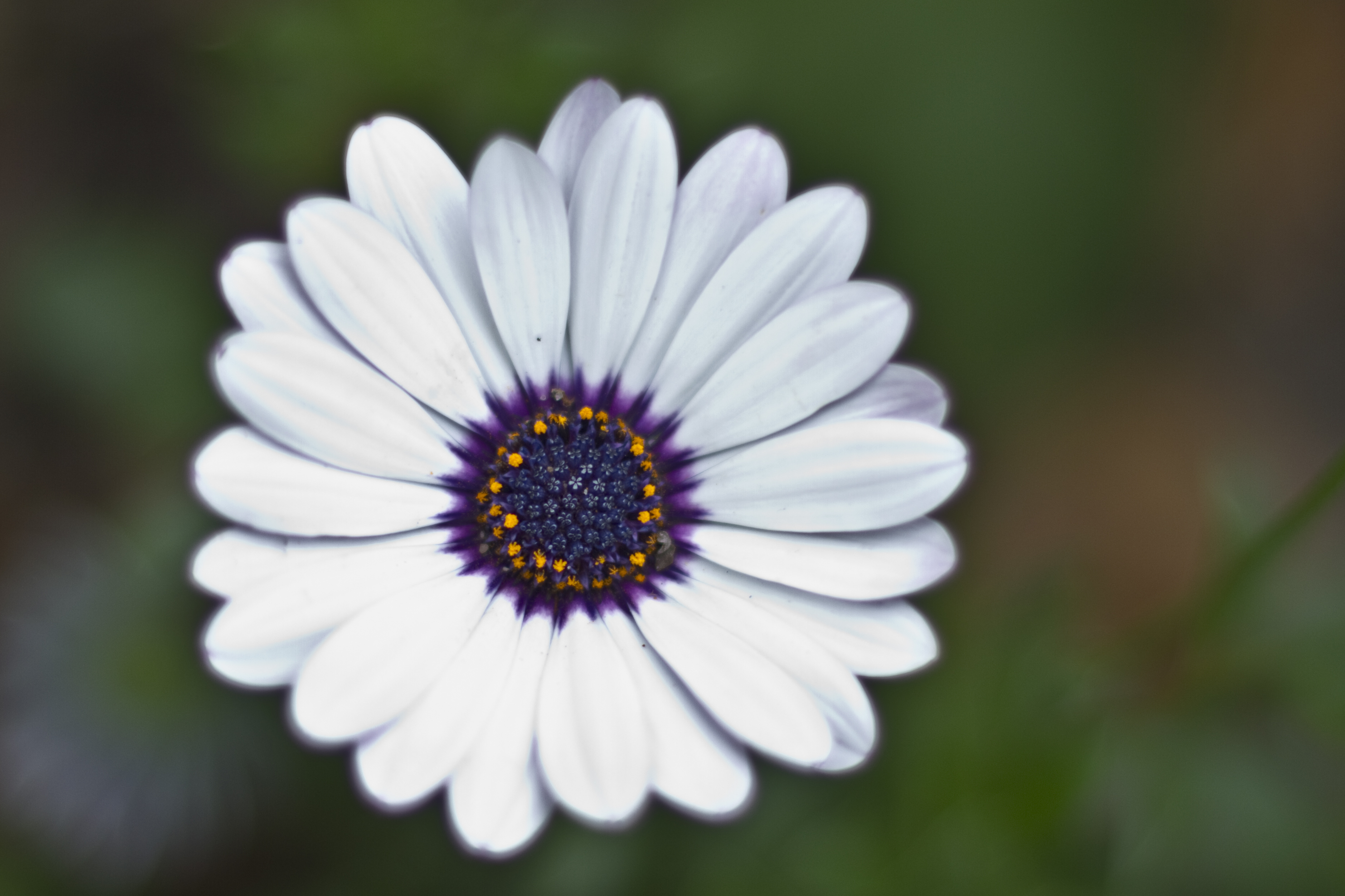 Flowers Braden Piper Photography