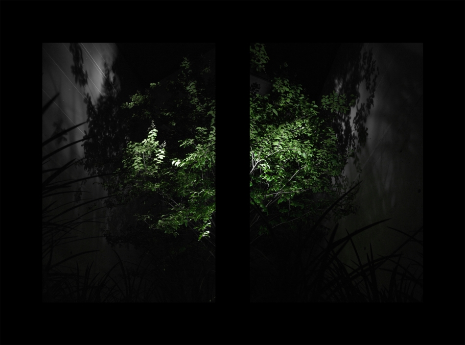 Two images of a tree lit by an external light casting a shadow onto a wall - a dyptych