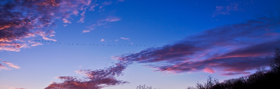 A large flock of birds migrates over Grafton, Illinois with a view of some purple clouds.