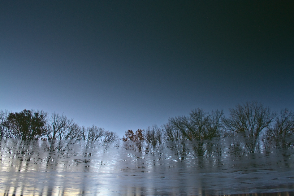 A reflection of barren trees in a freezing cold pond in Willmore Park, St. Louis, MO