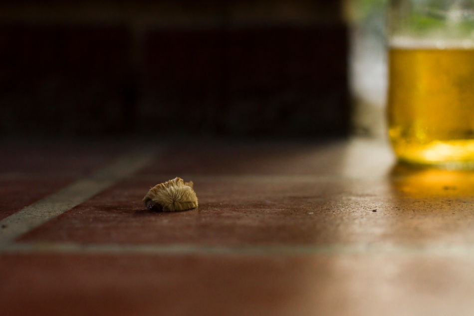 A close-up of a small furry caterpillar on a brick porch. bgpiperphotography.com