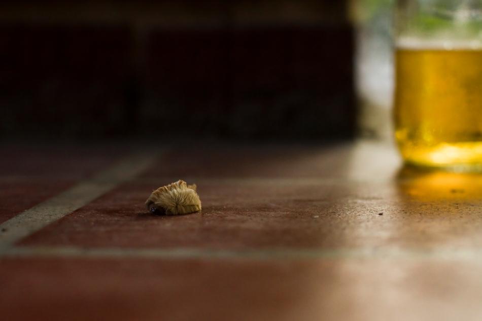 A close-up of a small furry caterpillar on a brick porch. bgpiperphotography.com